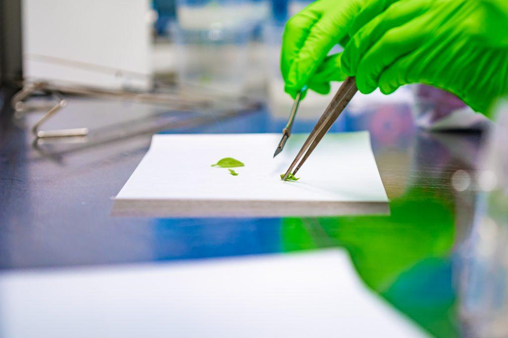 Cutting Tissue Culture